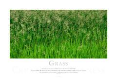 Grass print