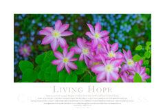 Living Hope print