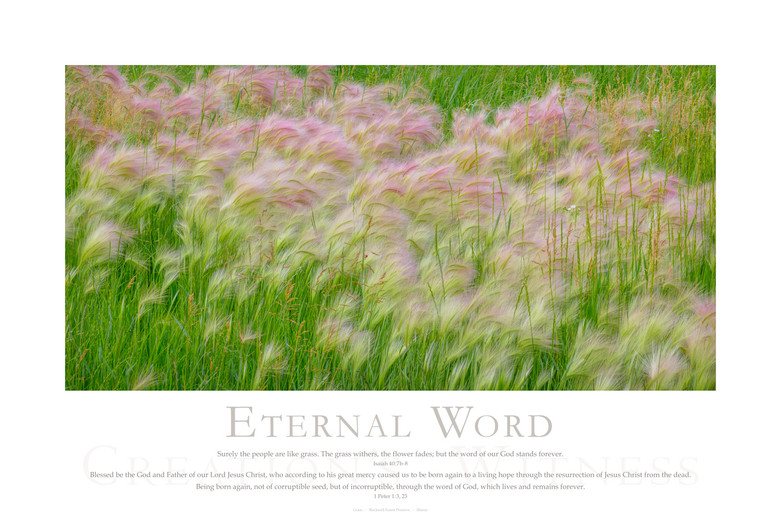 Surely the people are like grass. The grass withers, the flower fades; but the word of our God stands forever. Isaiah 40:7b-8...