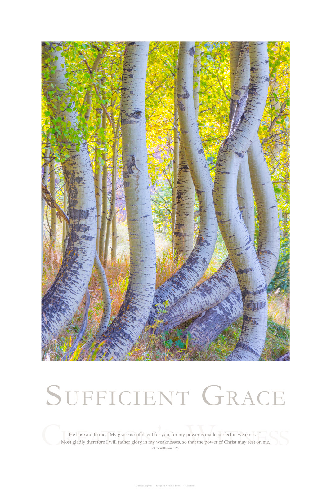 """He has said to me, """"My grace is sufficient for you, for my power is made perfect in weakness."""" Most gladly therefore I will..."""